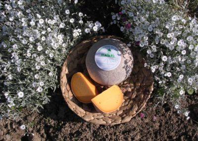 Mimolette du Nord